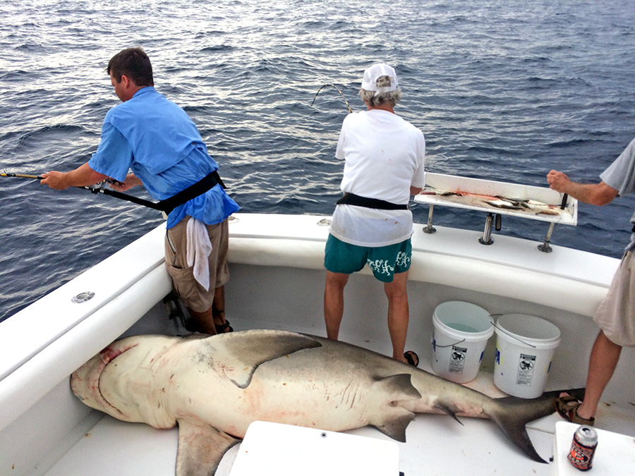 Red eye charters 470 lbs mako shark fishing for Shark fishing charters