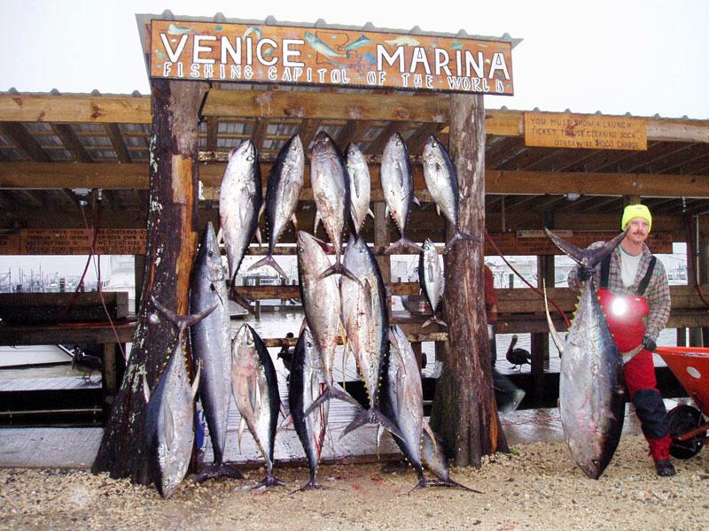 Red eye charters venice la fishing for Venice louisiana fishing charters